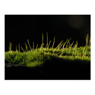 Marvelous Moss Post Card