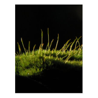 Marvelous Moss Postcards