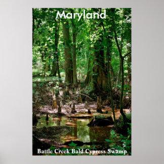 Maryland, Battle Creek Bald Cypress Swamp poster