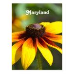 Maryland Black Eyed Susan Post Card