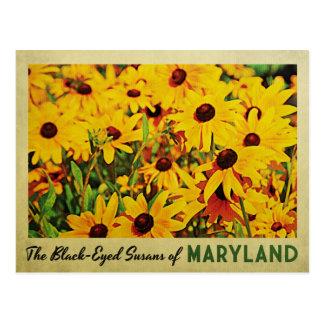 Maryland Black-Eyed Susans Postcard