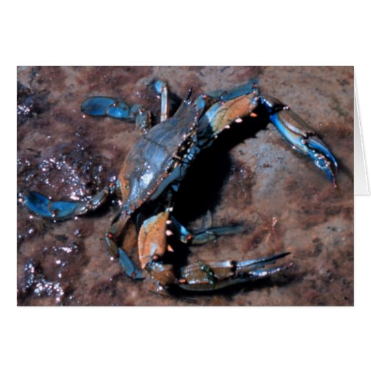 Maryland Blue Crab Card