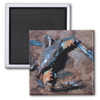 Maryland Blue Crab Magnet