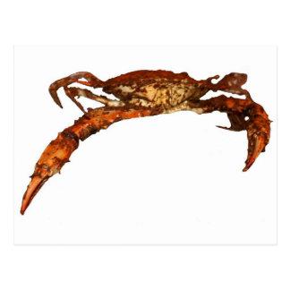 Maryland Blue Crab Postcard