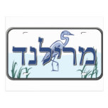 Maryland License Plate in Hebrew Post Card