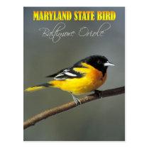 Maryland State Bird - Baltimore Oriole Postcard