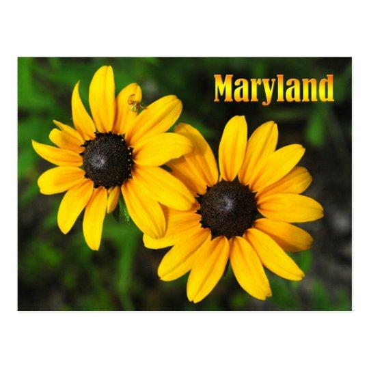 maryland state flower black eyed susan postcard zazzle com