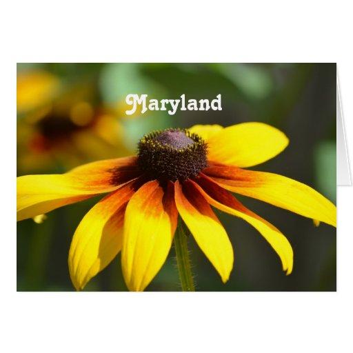 Maryland Susan observada negro Felicitacion