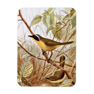 Maryland Yellowthroat Warbler Art Magnets