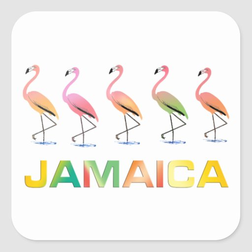 Marzo de los flamencos tropicales JAMAICA Pegatina Cuadrada