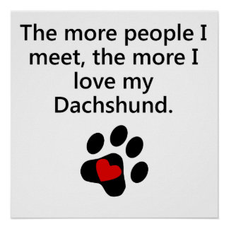 Más amor de I mi Dachshund Póster