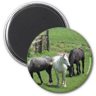 ¡Más caballos Imanes De Nevera
