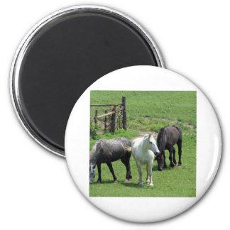 ¡Más caballos Iman Para Frigorífico