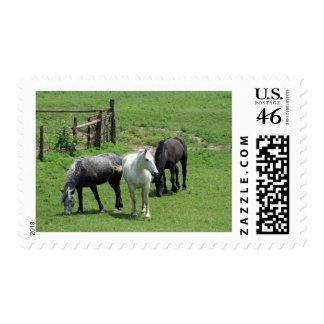 ¡Más caballos