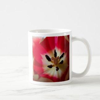 más cerca… y más cercano tazas de café