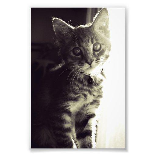 Más curioso, más curioso en blanco y negro impresión fotográfica