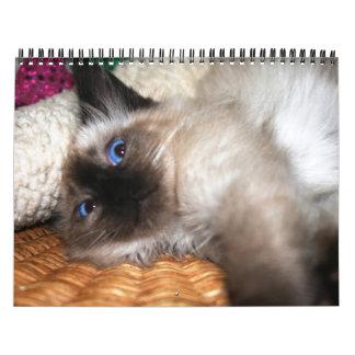 Más gatitos calendarios