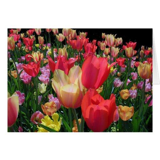 Más tulipanes tarjeta de felicitación