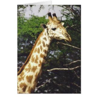 Masai de Twiga (jirafa del Masai) Felicitacion