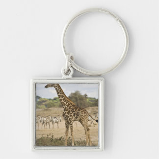 Masai Giraffe and Common Zebra at Amboseli NP, Keychain