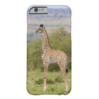 Masai Giraffe (Giraffa camelopardalis 2 Barely There iPhone 6 Case