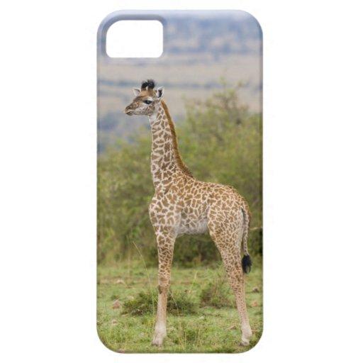 Masai Giraffe (Giraffa camelopardalis 2 iPhone 5 Cases