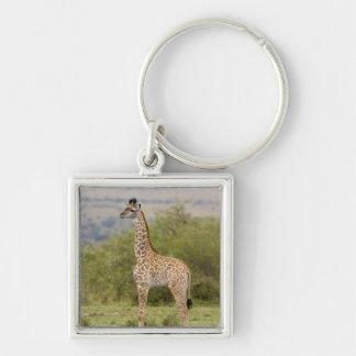 Masai Giraffe (Giraffa camelopardalis 2 Keychain