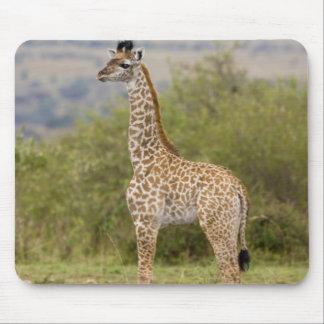 Masai Giraffe (Giraffa camelopardalis 2 Mouse Pads