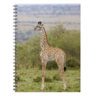 Masai Giraffe (Giraffa camelopardalis 2 Notebook
