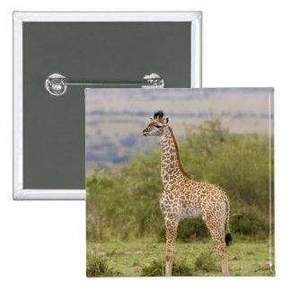 Masai Giraffe (Giraffa camelopardalis 2 Pinback Button