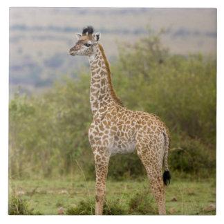 Masai Giraffe (Giraffa camelopardalis 2 Tile