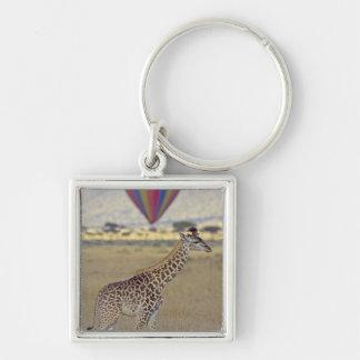 Masai Giraffe (Giraffa camelopardalis Keychain