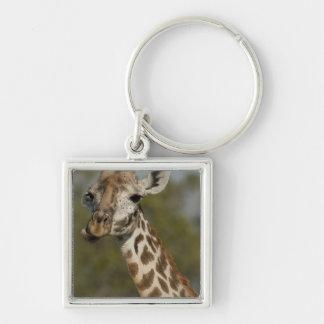 Masai Giraffe, Giraffa camelopardalis Keychain