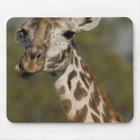 Masai Giraffe, Giraffa camelopardalis Mouse Pad
