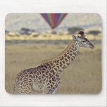 Masai Giraffe (Giraffa camelopardalis Mouse Pad