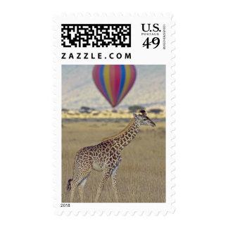 Masai Giraffe (Giraffa camelopardalis Postage