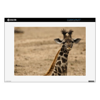 """Masai Giraffe, Giraffa camelopardalis, resting 15"""" Laptop Skin"""