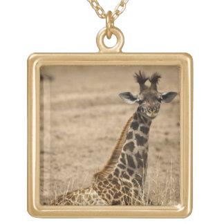 Masai Giraffe, Giraffa camelopardalis, resting Gold Plated Necklace