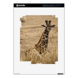 Masai Giraffe, Giraffa camelopardalis, resting iPad 3 Decal
