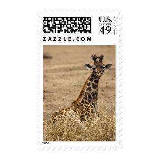Masai Giraffe, Giraffa camelopardalis, resting Stamp