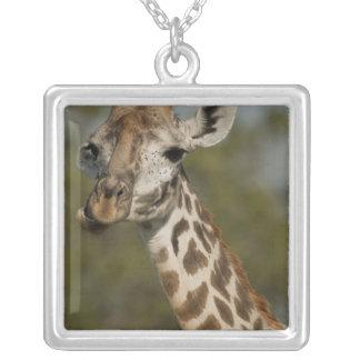 Masai Giraffe, Giraffa camelopardalis Silver Plated Necklace
