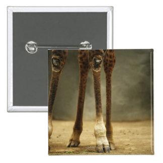 Masai giraffe low angle view of legs Giraffa Button