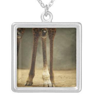 Masai giraffe, low angle view of legs, Giraffa Silver Plated Necklace
