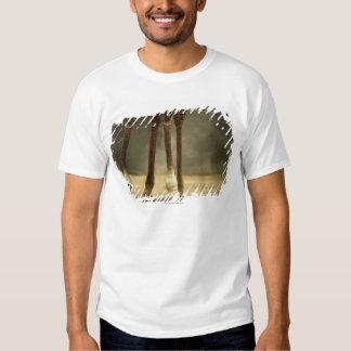 Masai giraffe, low angle view of legs, Giraffa T-Shirt
