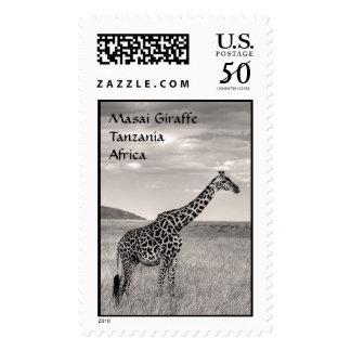 Masai Giraffe Postage