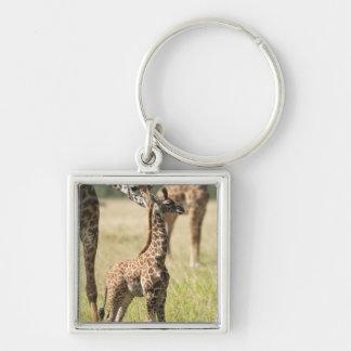 Masai giraffes, Giraffa camelopardalis 2 Keychain