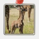 Masai giraffes, Giraffa camelopardalis 2 Square Metal Christmas Ornament