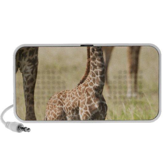 Masai giraffes, Giraffa camelopardalis 2 Portable Speaker