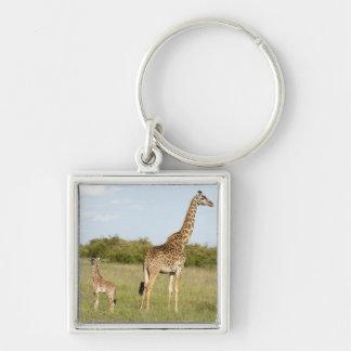 Masai giraffes, Giraffa camelopardalis 3 Keychain