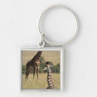 Masai giraffes, Giraffa camelopardalis Keychain